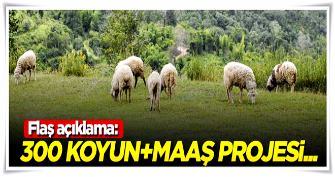 300 koyun+maaş projesi hakkında flaş açıklama