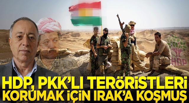 HDP, PKK'lı teröristleri korumak için Irak'a koşmuş