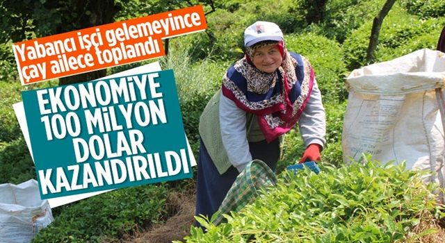 Rize'de çay üreticileri hasadı kendileri yaptı: 100 milyon dolar bölgede kaldı