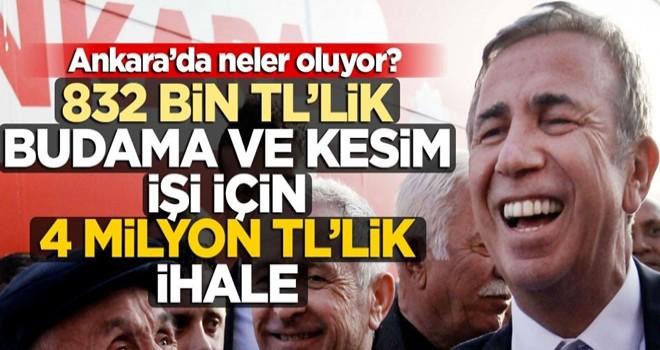 832 bin TL'lik budama ve kesim işi için 4 milyon TL'lik ihale! Ankara'da neler oluyor?