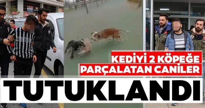 Maltepe'de kediyi köpeklere parçalatan şahıslar yakalandı