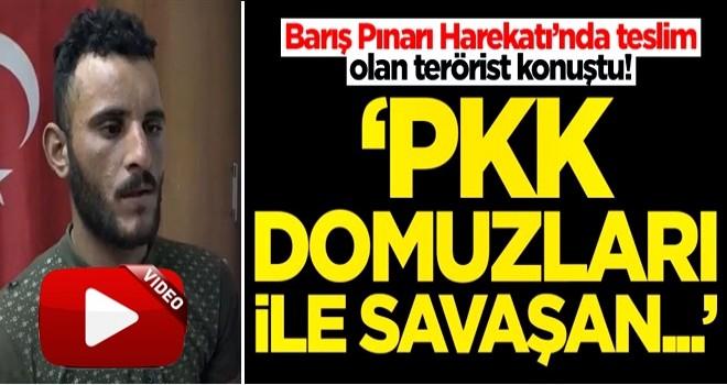 Barış Pınarı Harekatı'nda teslim olan terörist konuştu! 'PKK domuzları ile savaşan...'