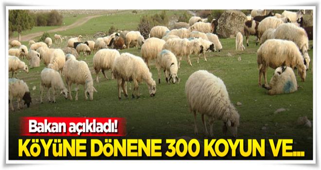 Köyüne geri dönene 300 koyun + maaş!