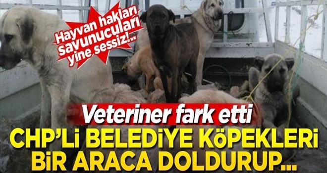 Hayvan hakları savunucuları yine sessiz... CHP'li belediye 7 köpeği bir araca doldurup boş alana atmak istedi