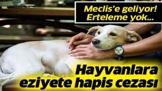 Hayvana eziyet edene 2 yıl hapis cezası: Düzenleme Meclis'e geliyor